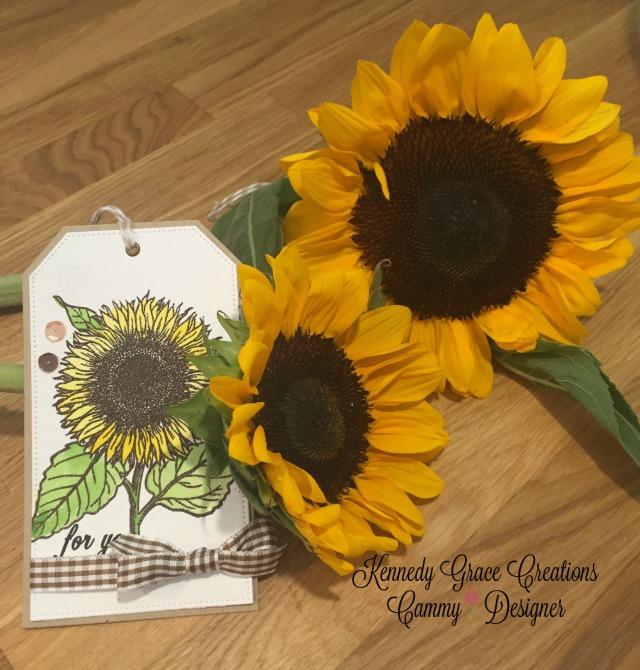 KGC Sunflowers for Jill & Amy.jpg